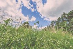 sonnige Wiese mit Blumen und grünem Gras niedriger Standpunkt - v Lizenzfreies Stockbild