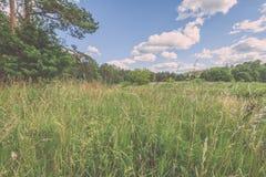 sonnige Wiese mit Blumen und grünem Gras niedriger Standpunkt - v Stockbild