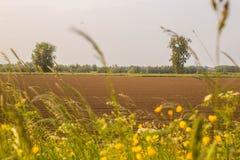 Sonnige Wiesenlandschaft mit Sonnenuntergang im Sommer bunt Lizenzfreies Stockbild