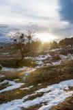 Sonnige Winterlandschaft mit einem verbogenen Baum und einem Blendenfleck Russland, Stary Krym Lizenzfreie Stockfotos