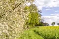 Sonnige woodside Landschaft Lizenzfreie Stockfotografie