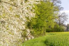 Sonnige woodside Landschaft Stockfotos