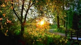 Sonniger Abend im Wald Lizenzfreie Stockbilder