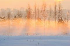 Sonniger Abend und der Winternebel Lizenzfreies Stockbild