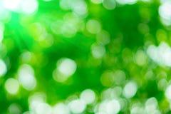 Sonniger abstrakter grüner Naturhintergrund Lizenzfreies Stockbild