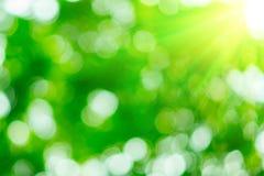 Sonniger abstrakter grüner Naturhintergrund Stockbilder