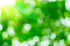 Sonniger abstrakter grüner Naturhintergrund Lizenzfreies Stockfoto
