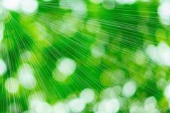 Sonniger abstrakter grüner Naturhintergrund Stockfoto