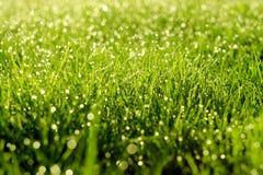 Sonniger abstrakter grüner Naturhintergrund Selektiver Fokus Lizenzfreies Stockbild