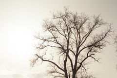 Sonniger Baum Stockfoto