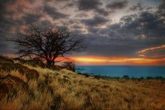 Sonniger Baum von Hawaii-2 lizenzfreies stockfoto