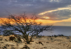 Sonniger Baum von Hawaii Lizenzfreie Stockbilder