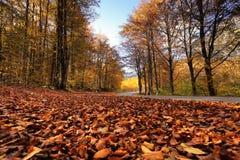 Sonniger Fallpark mit gefallenen Blättern und Straße Lizenzfreie Stockfotos