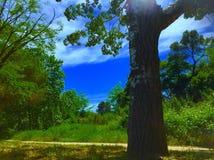 Sonniger Frühlingstag in Cerdanyola Del Valles Stockfoto