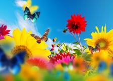 Sonniger Garten von Blumen und von Schmetterlingen Lizenzfreies Stockfoto