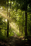 Sonniger grüner Wald Stockbild