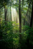 Sonniger grüner Wald Lizenzfreie Stockbilder