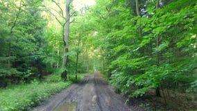 Sonniger grüner Wald im Sommer, Polen stock video