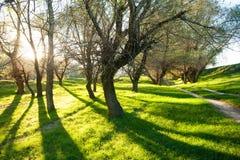 Sonniger grüner Wald mit Schatten Lizenzfreie Stockbilder