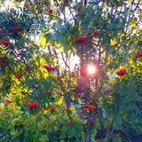 Sonniger Herbst Stockbild
