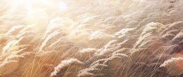 Sonniger Herbst Naturhintergrund; abstrakte Oktober-Landschaft Stockfotografie