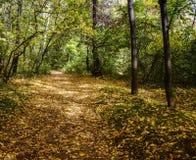 Sonniger Herbstmorgen im Wald Lizenzfreies Stockbild