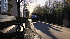 Sonniger Herbstnachmittag stock video