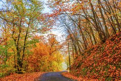 Sonniger Herbsttag Lizenzfreies Stockbild