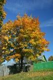 Sonniger Herbsttag Stockfoto