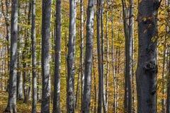 Sonniger Herbsttag in einem Wald Lizenzfreie Stockfotografie