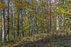 Sonniger Herbsttag in einem Wald Lizenzfreie Stockbilder