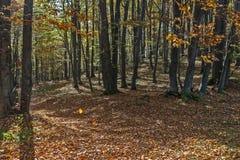 Sonniger Herbsttag in einem Wald Stockfoto
