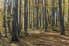 Sonniger Herbsttag in einem Wald Lizenzfreie Stockfotos