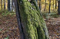Sonniger Herbsttag in einem Wald Stockfotos