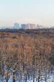 Sonniger kalter Morgen über Stadtpark im Winter stockfotografie