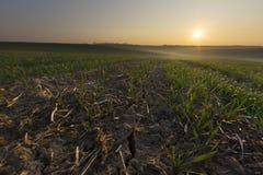 Sonniger Morgen im Ackerland Stockbilder