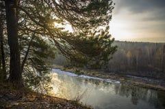 Sonniger Morgen im Fluss im Wald Lizenzfreie Stockbilder