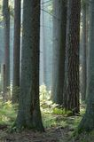 Sonniger Morgen im Wald. Lizenzfreie Stockfotos