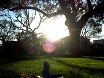 Sonniger Nachmittag im Park stockfotos