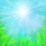 Sonniger natürlicher Hintergrund mit Ahornblättern Unscharfer weicher Hintergrund Lizenzfreies Stockfoto