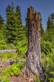 Sonniger Naturwald von Buchenbäumen im Sommer Lizenzfreies Stockfoto