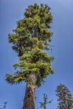 Sonniger Naturwald von Buchenbäumen im Sommer Stockfotos
