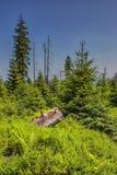 Sonniger Naturwald von Buchenbäumen im Sommer Stockbilder
