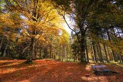 Sonniger orange Park des Herbstes mit Bank in Slowenien Stockfotografie