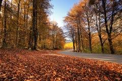 Sonniger Park des Herbstes mit gefallenen Blättern und Straße Stockfotografie