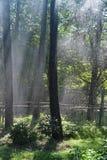 Sonniger Regen Stockbilder