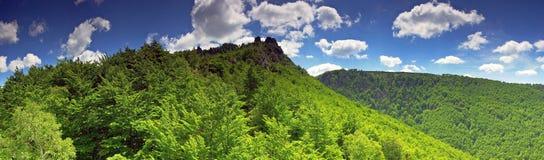 Sonniger Sommertag im Buchenholz (Panorama) stockfotos