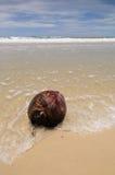 Sonniger Strand mit einer reifen Kokosnuss Lizenzfreies Stockfoto