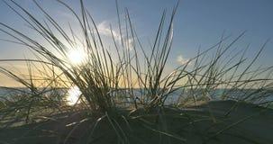 Sonniger Strand mit Sanddünen und blauem Himmel 4k stock footage