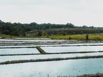 Sonniger Tag auf den Reisgebieten in Bali, Indonesien lizenzfreies stockbild